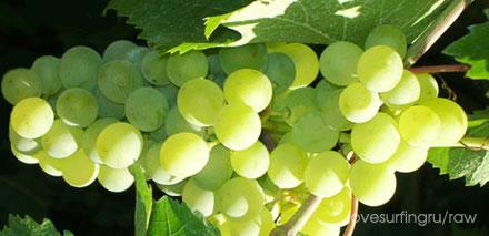 Итальянский виноград